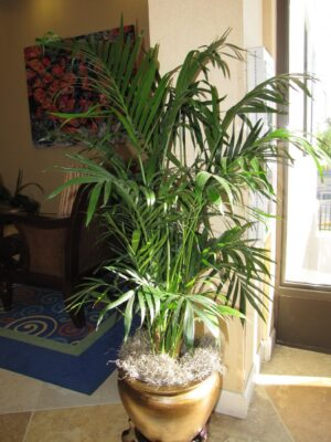 Grow Fresh Air at home with Easy Indoor Plants