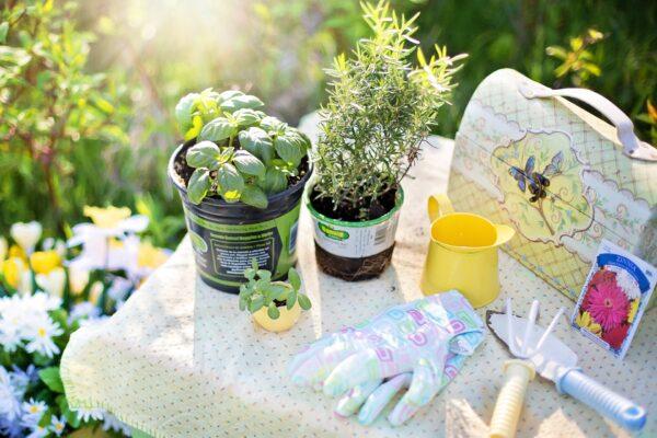 6 Herbs to Kickstart Your Kitchen Garden