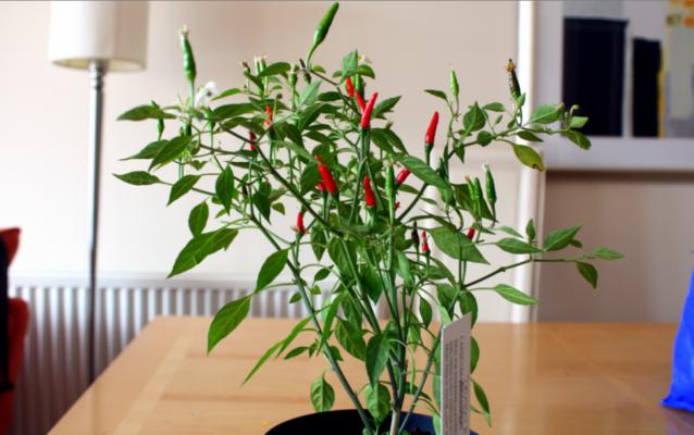 6-herbs-to-kickstart-your-kitchen-garden/