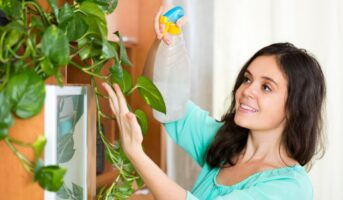 Best indoor plants for small rooms and apartments