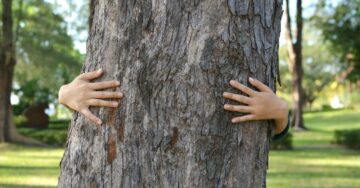 Aarey Colony metro carshed: Activists launch Chipko movement to protect trees
