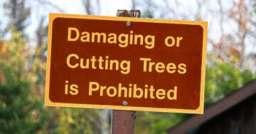 Bombay HC restrains Thane Tree Authority from felling trees