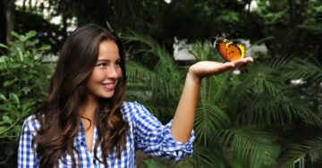 Tips to create a garden for butterflies, at home