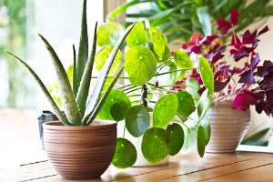 Rent a plant service: An easy to way to add greenery to a space