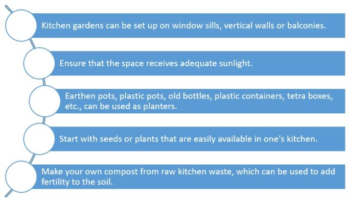 Tips to set up a kitchen garden at home