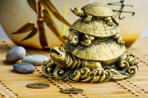 Tips to bring wealth and luck using tortoise in home décor