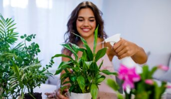 Lucky plants for the home