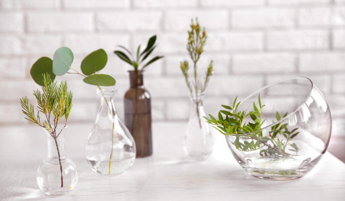 Gardening tips to grow beautiful indoor plants in water