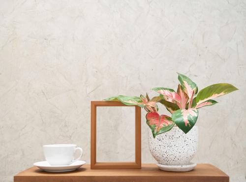 Indoor water plants Aglaonema