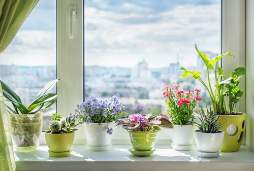 Flower gardening for beginners