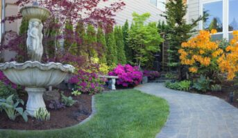 Evergreen trees for small gardens