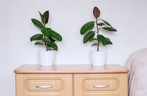 Top 10 low maintenance indoor plants and how to care for them