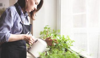 Tips to grow your own indoor vegetable garden