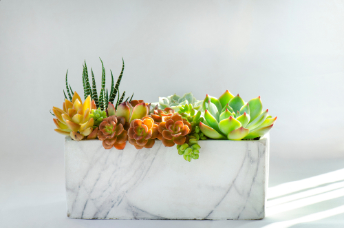 Inspiring flower pot design ideas to add greenery to your abode